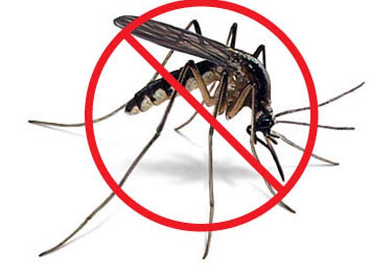 Cuidate de los mosquitos