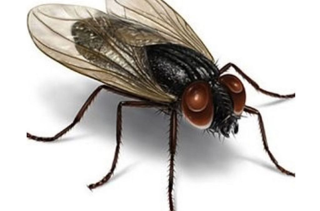 Como ahuyentar moscas el blog de farmacia market - Ahuyentar moscas exterior ...