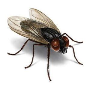 ahuyentador moscas