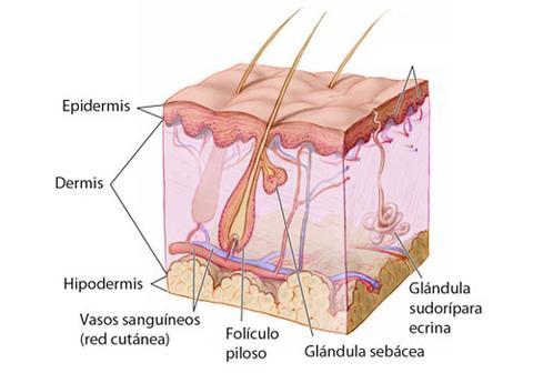 Colageno para la piel