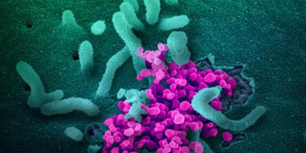 Combatiendo el coronavirus, Vitamina C, como puede ayudarte
